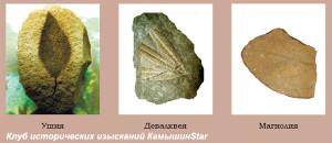 Флора третичного периода в камне. Образцы с Гор Ушей